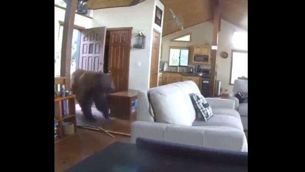 Αρκούδα γκρίζλι σπάει για πλάκα την πόρτα και μπαίνει σε σπίτι  - Sputnik Ελλάδα