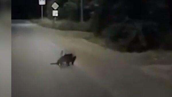 Γάτες συνοδεύουν τραυματισμένο σκύλο - Sputnik Ελλάδα