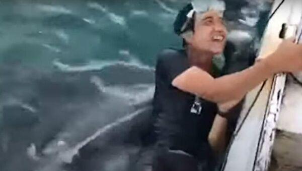 Φαλαινοκαρχαρίας ανοίγει το στόμα για να καταπιεί τουρίστα στη νήσο Βόρνεο - Sputnik Ελλάδα
