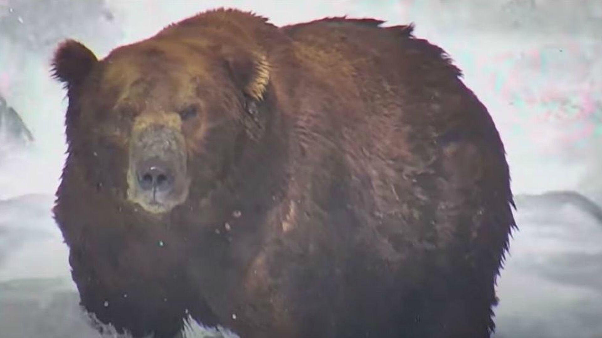 Ο αρκούδος Ερλ κέρδισε τον τίτλο «Πιο Παχιά Αρκούδα 2020» στον διαγωνισμό του εθνικού πάρκου Katmai, στην Αλάσκα - Sputnik Ελλάδα, 1920, 03.10.2021
