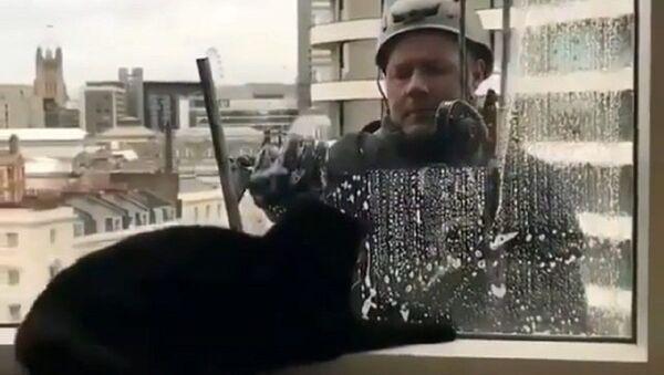 Γατούλα βλέπει άντρα να καθαρίζει τα τζάμια σε ουρανοξύστη - Sputnik Ελλάδα