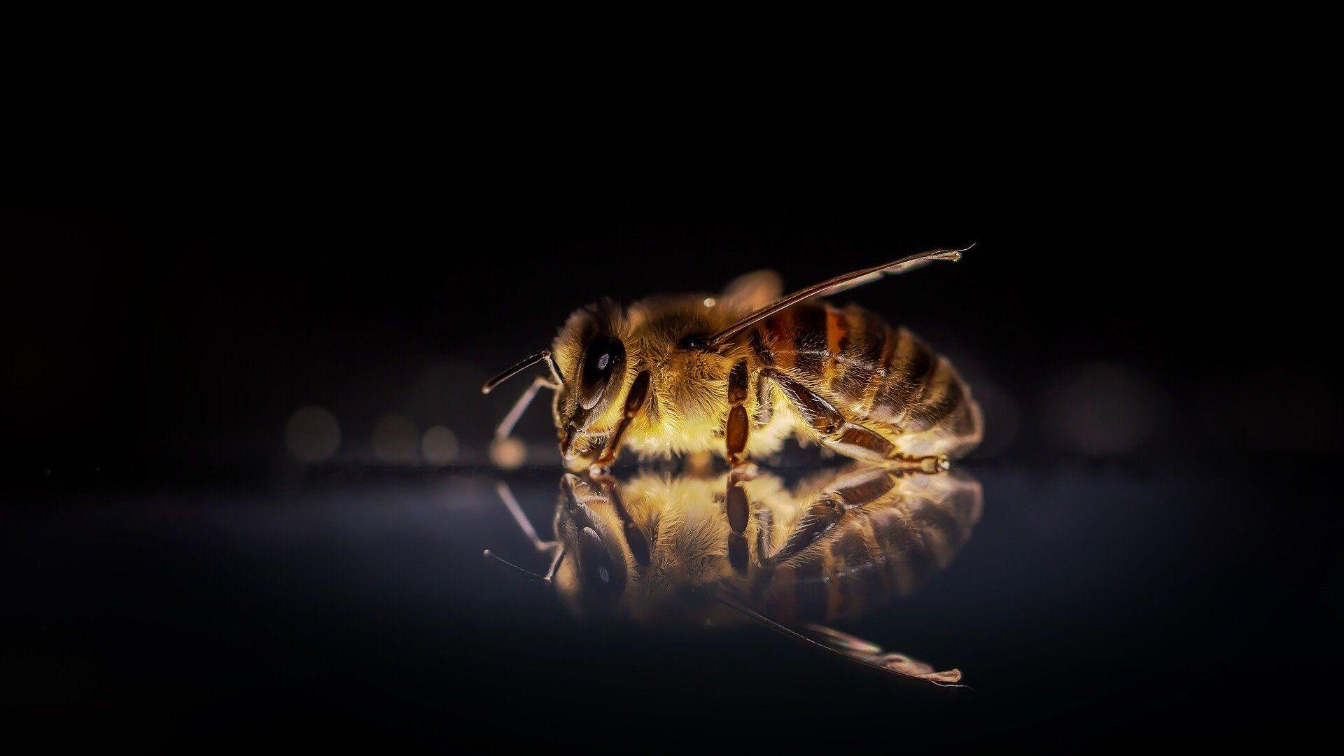 Μια μέλισσα (φωτ. αρχείου) - Sputnik Ελλάδα, 1920, 27.09.2021