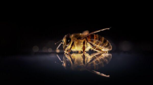 Μια μέλισσα (φωτ. αρχείου) - Sputnik Ελλάδα