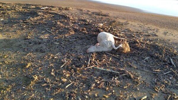 Νεκρά πρόβατα στην Ηλεία - Sputnik Ελλάδα