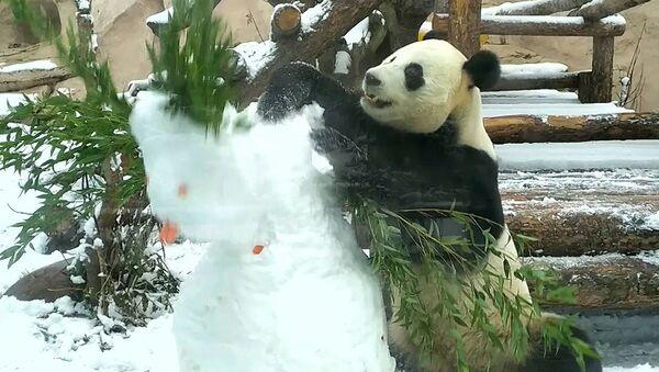 Kung Fu panda «εξολοθρεύει» χιονάνθρωπο και τρώει τη καροτένια «μύτη» του  - Sputnik Ελλάδα