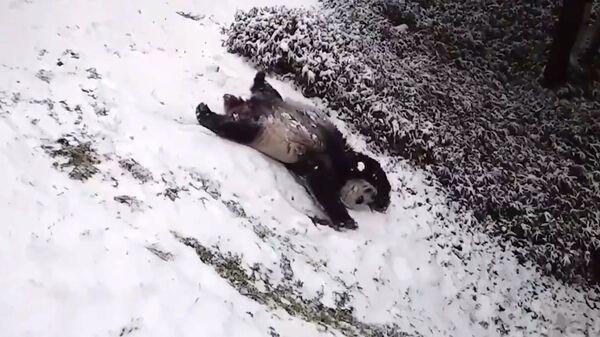 Ώρα για διασκέδαση! Αξιολάτρευτα πάντα κάνουν τσουλήθρα και «βαρελάκια» στο χιόνι - Sputnik Ελλάδα
