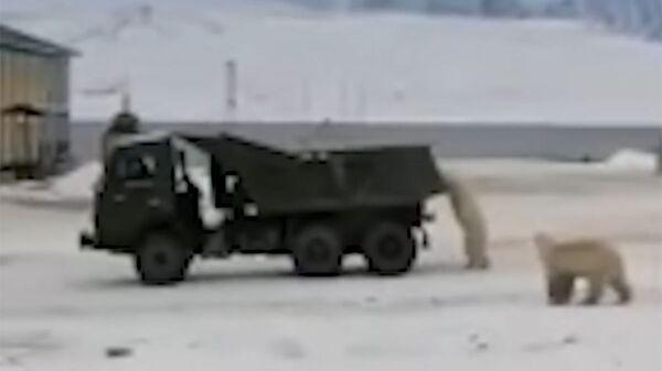 «Συμμορία» πολικών αρκούδων «κλέβει» φορτηγό στη Γιακουτία - Sputnik Ελλάδα