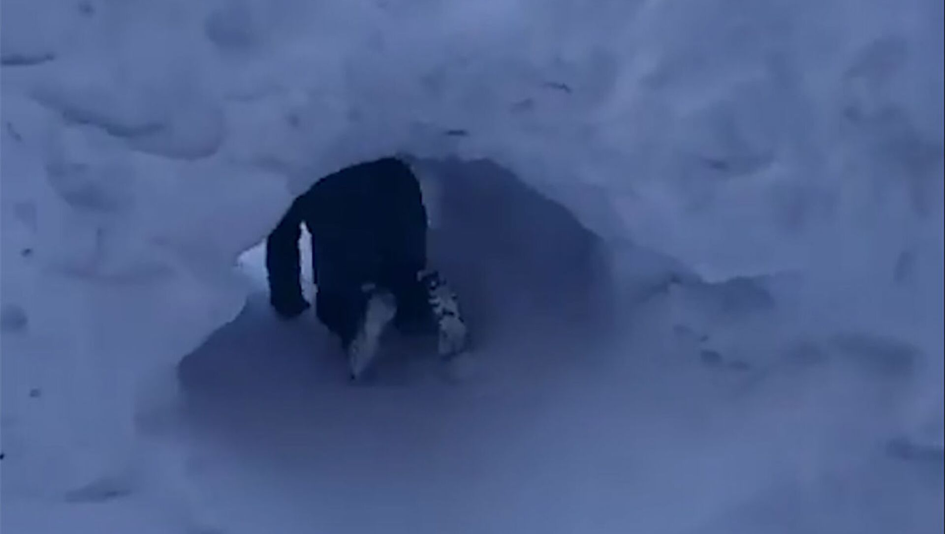 Εφευρετικοί μαθητές: Παιδιά από τη Σιβηρία σκάβουν τούνελ στο χιόνι για φθάσουν στο σχολείο - Sputnik Ελλάδα, 1920, 25.02.2021