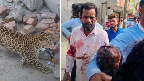 Λεοπάρδαλη τραυμάτισε μωρό σε πόλη της Ινδίας - Sputnik Ελλάδα