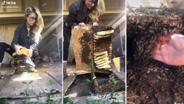 Μελισσοκόμος μεταφέρει άγριες μέλισσες από πάτωμα σπιτιού μέσα σε κυψέλη - Sputnik Ελλάδα
