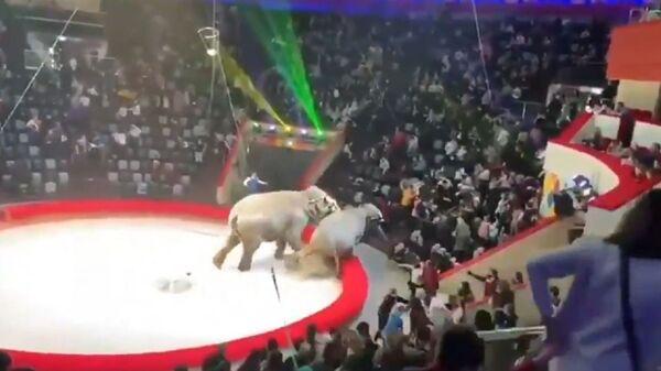 Τρόμος σε τσίρκο από μονομαχία ελεφάντων που τρελάθηκαν - Sputnik Ελλάδα