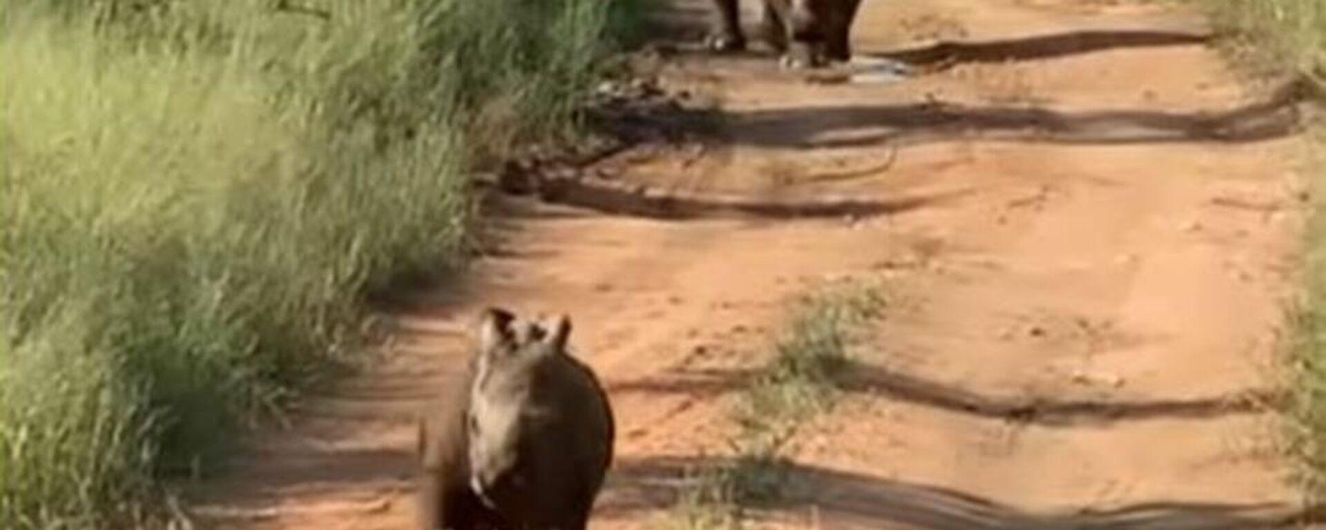 Χαρούμενο ρινοκεράκι τρέχει χαρωπό στο εθνικό πάρκο άγριας ζωής Kruger στη Νότια Αφρική - Sputnik Ελλάδα, 1920, 07.04.2021
