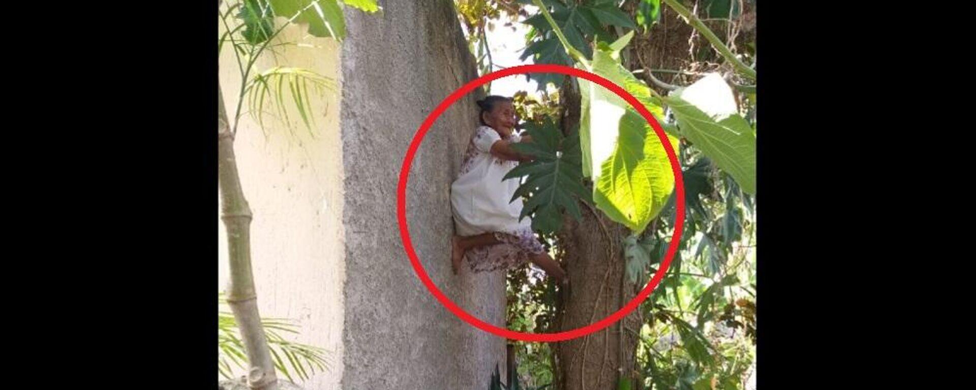 Γιαγιά 88 ετών σκαρφαλώνει στα δέντρα για να κόψει φρούτα - Sputnik Ελλάδα, 1920, 10.04.2021