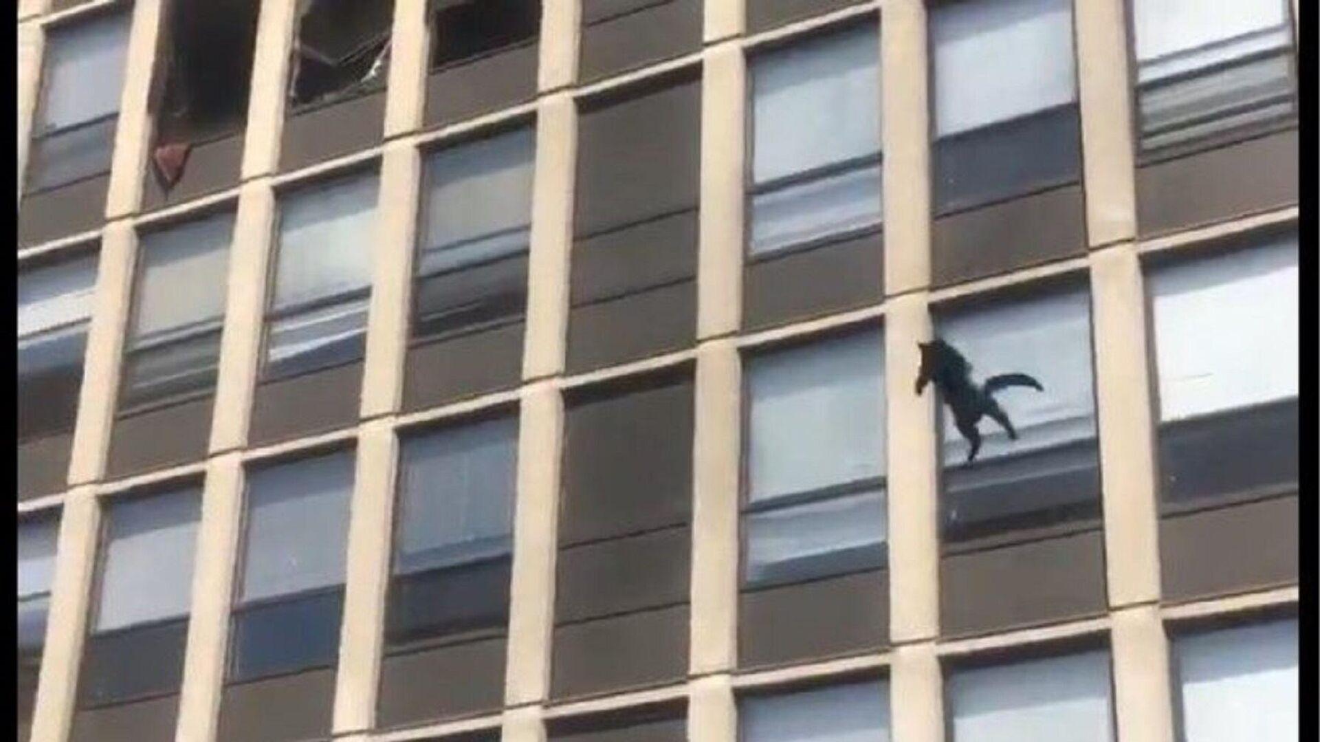 Γάτα πήδηξε από τον 5ο όροφο φλεγόμενου κτιρίου - Sputnik Ελλάδα, 1920, 14.05.2021