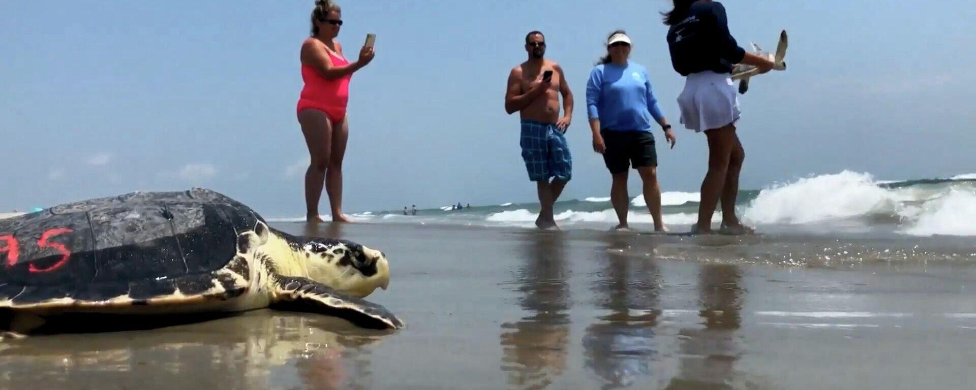 Χελωνο-διάσωση: Απελευθέρωση δεκάδων θαλάσσιων χελωνών που είχαν διασωθεί - Sputnik Ελλάδα, 1920, 27.05.2021