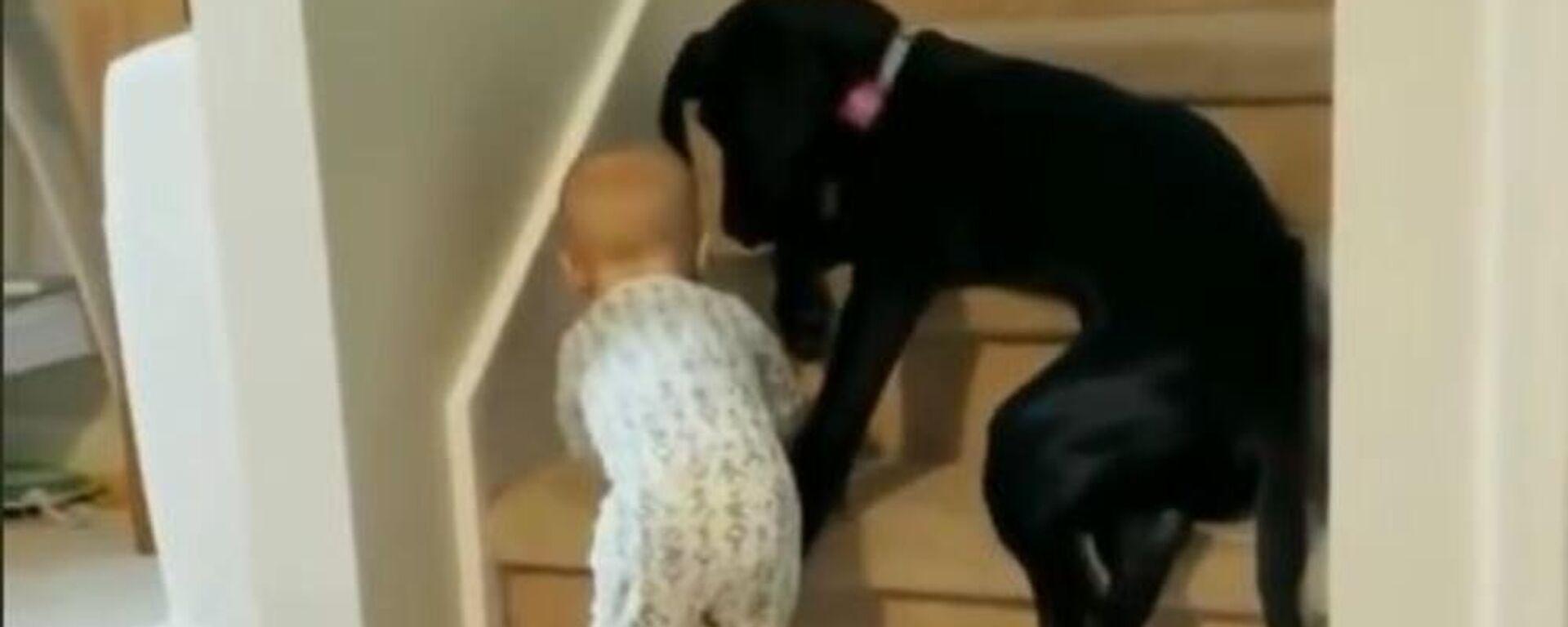 Απίθανος σκύλος δεν αφήνει μωρό να πέσει από τις σκάλες - Sputnik Ελλάδα, 1920, 17.06.2021