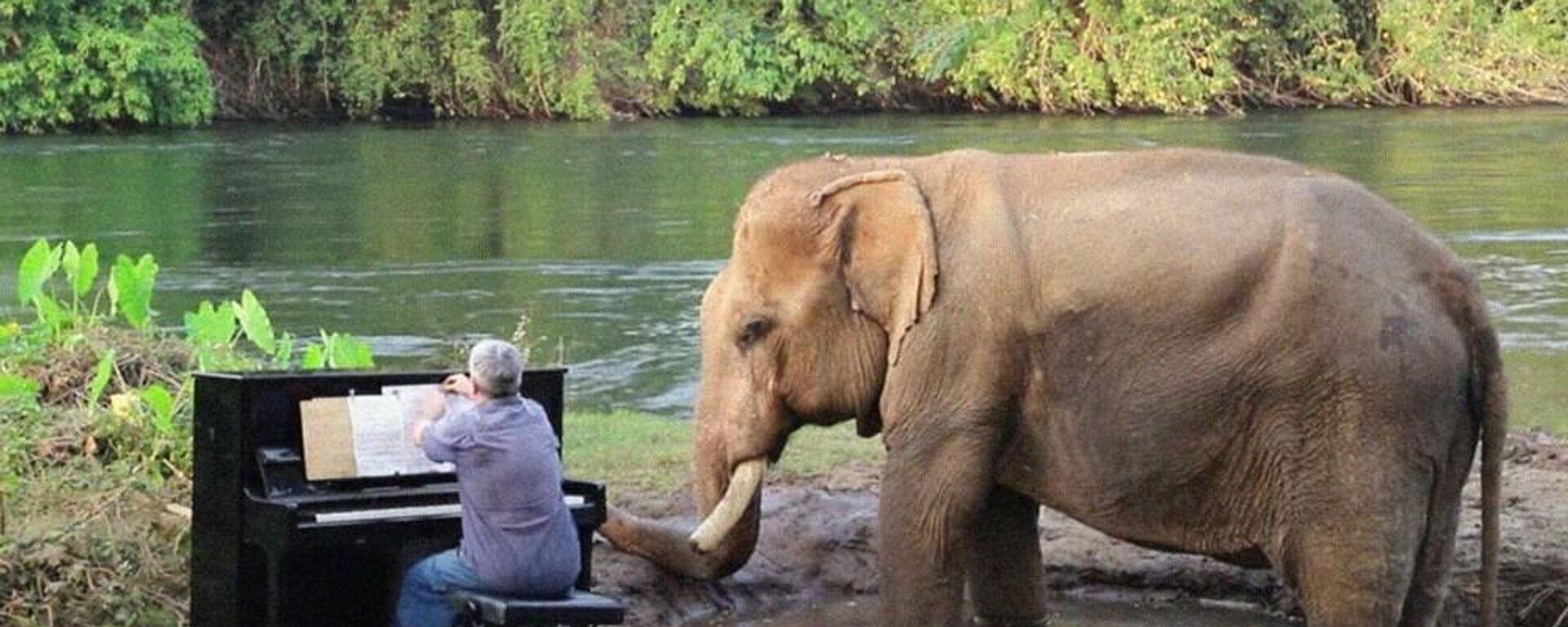 Ελέφαντας απολαμβάνει Μπετόβεν στο πιάνο στο καταφύγιο Elephants World στην Ταϊλάνδη - Sputnik Ελλάδα, 1920, 25.07.2021