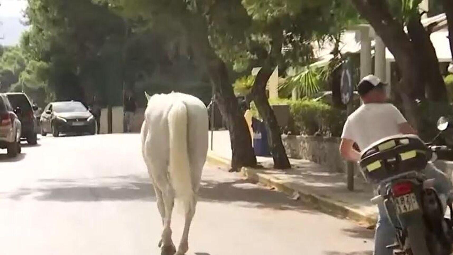 Άλογα στη Βαρυμπόμπη - Sputnik Ελλάδα, 1920, 03.08.2021