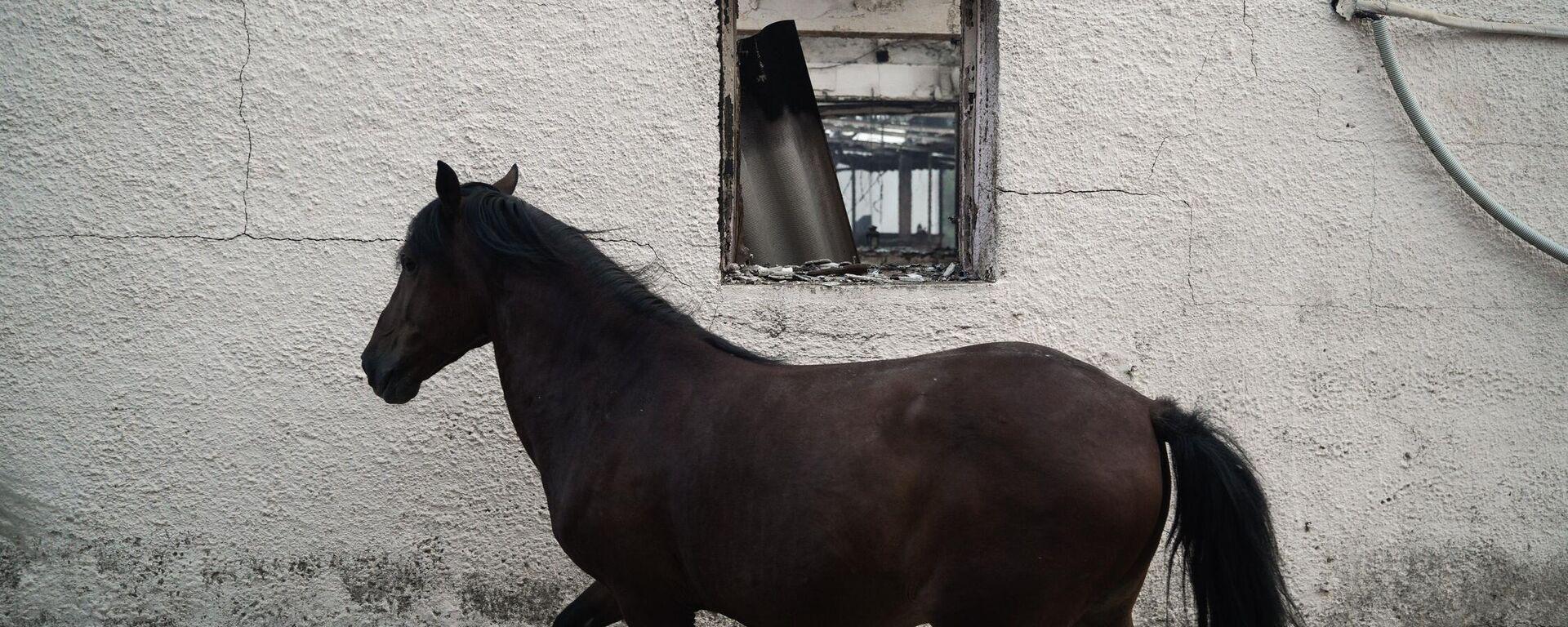 Τα ζώα θύματα της φωτιάς στη Βαρυμπόμπη - Sputnik Ελλάδα, 1920, 09.08.2021