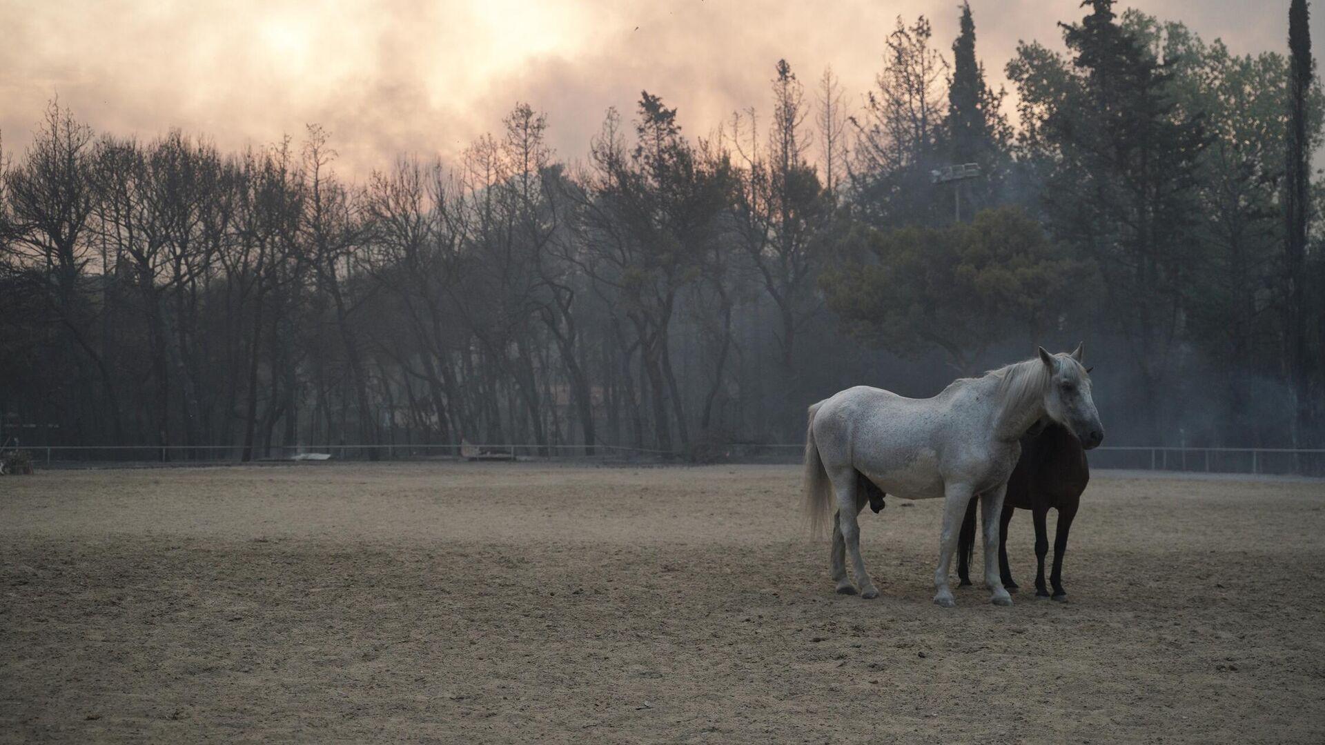 Άλογα προσπαθούν να γλυτώσουν από τη φωτιά στη Βαρυμπόμπη - Sputnik Ελλάδα, 1920, 04.08.2021