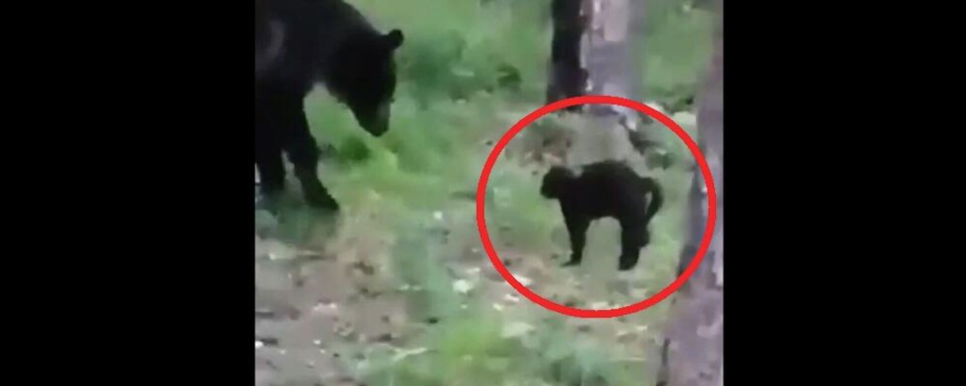 Μαύρος γάτος τα βάζει με αρκούδα να σώσει τα αφεντικά του - Sputnik Ελλάδα, 1920, 05.08.2021