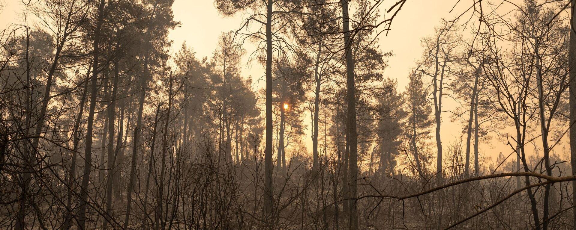 Καμένες εκτάσεις από τη φωτιά στην Εύβοια - Sputnik Ελλάδα, 1920, 13.08.2021