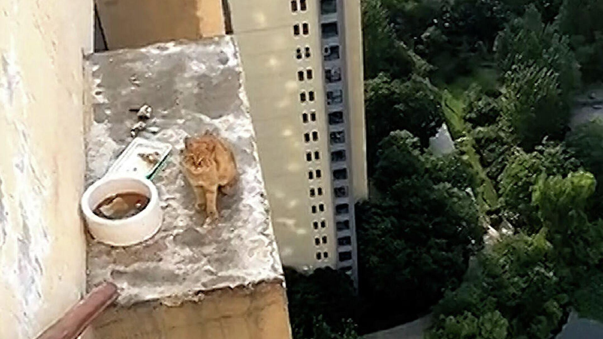 Ίλιγγος και αγωνία: Έσωσαν γάτα που παγιδεύτηκε έξω από τον 33ο όροφο κτιρίου στην Κίνα - Sputnik Ελλάδα, 1920, 19.08.2021