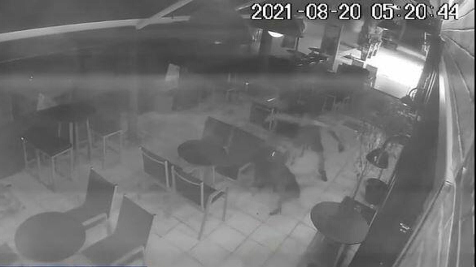 Βίντεο - ντοκουμέντο από την απάνθρωπη επίθεση κατά αδέσποτου σκύλου από 25χρονο - Sputnik Ελλάδα, 1920, 25.08.2021