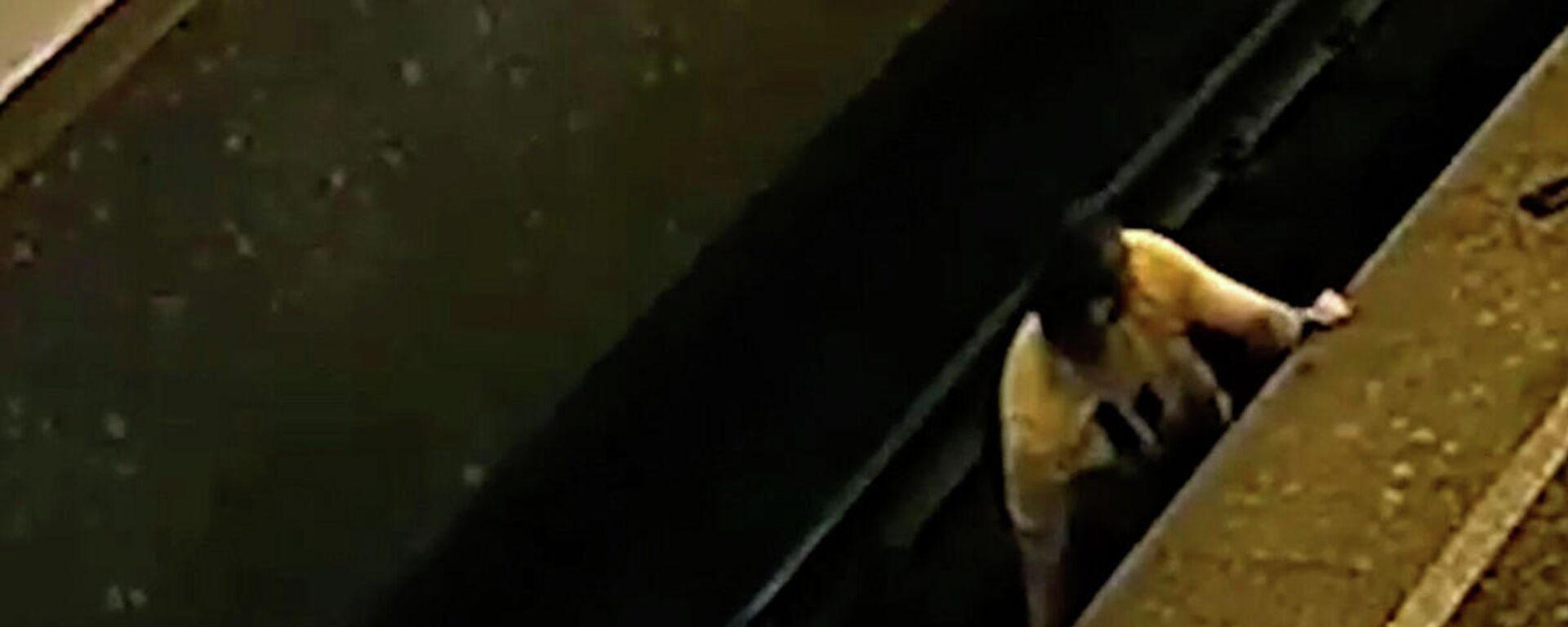 Ήρωας χωρίς κάπα στη Μόσχα: Ρίσκαρε τη ζωή του για να σώσει άνδρα που έπεσε στις ράγες του μετρό - Sputnik Ελλάδα, 1920, 30.08.2021