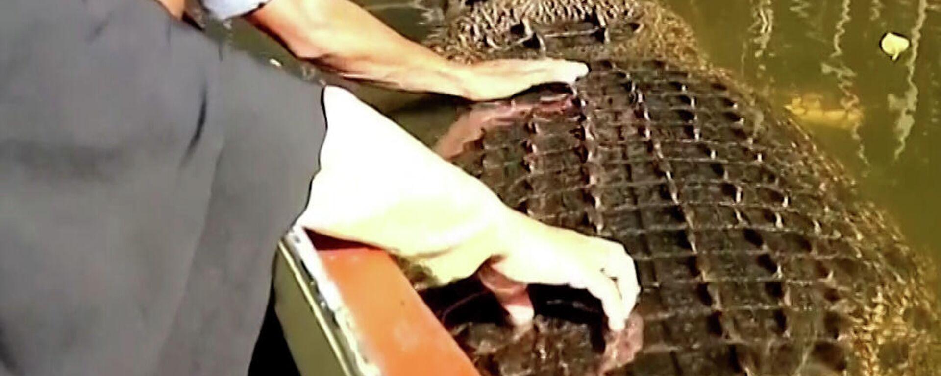 Επικίνδυνα παιχνίδια: Φιλικός κροκόδειλος αφήνει να τον χαϊδέψουν και να τον ταΐσουν - Sputnik Ελλάδα, 1920, 03.09.2021