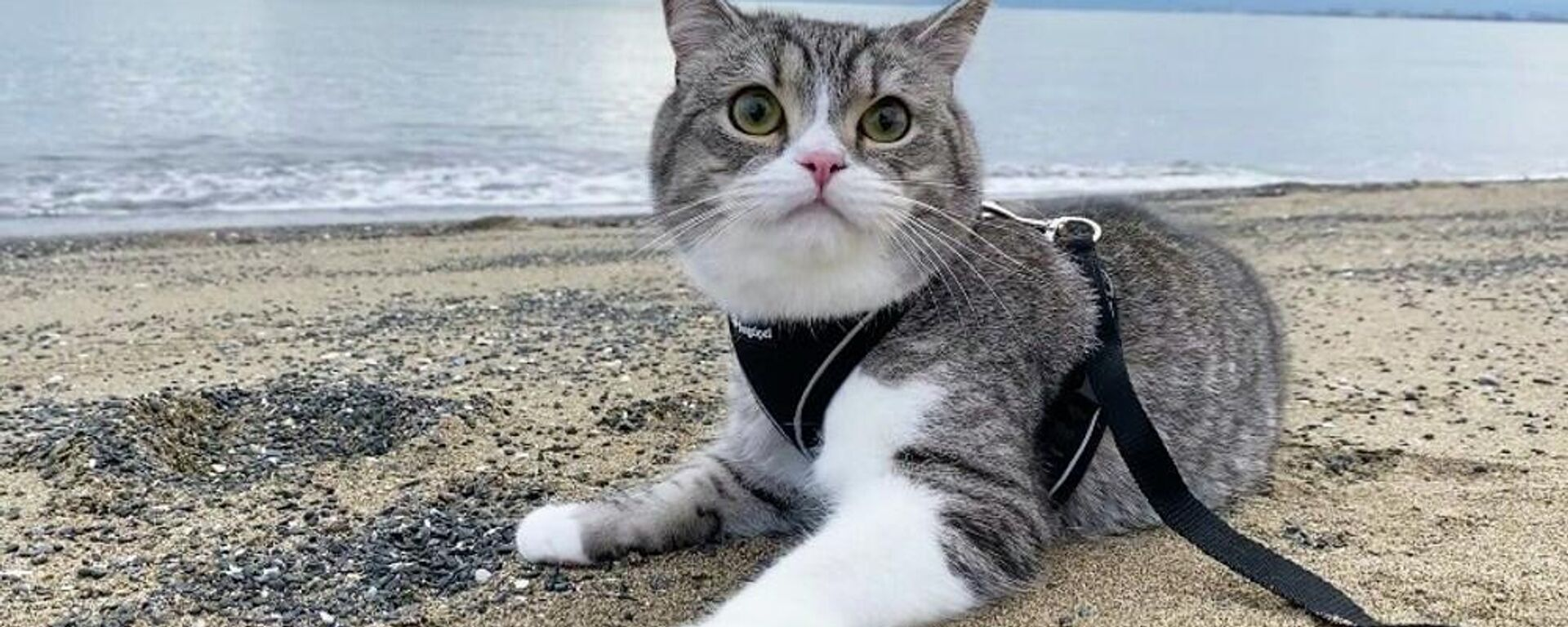 Ο γατούλης Μοτιμάρου είναι η γάτα με τα πιο πολλά views στο YouTube - Sputnik Ελλάδα, 1920, 09.09.2021