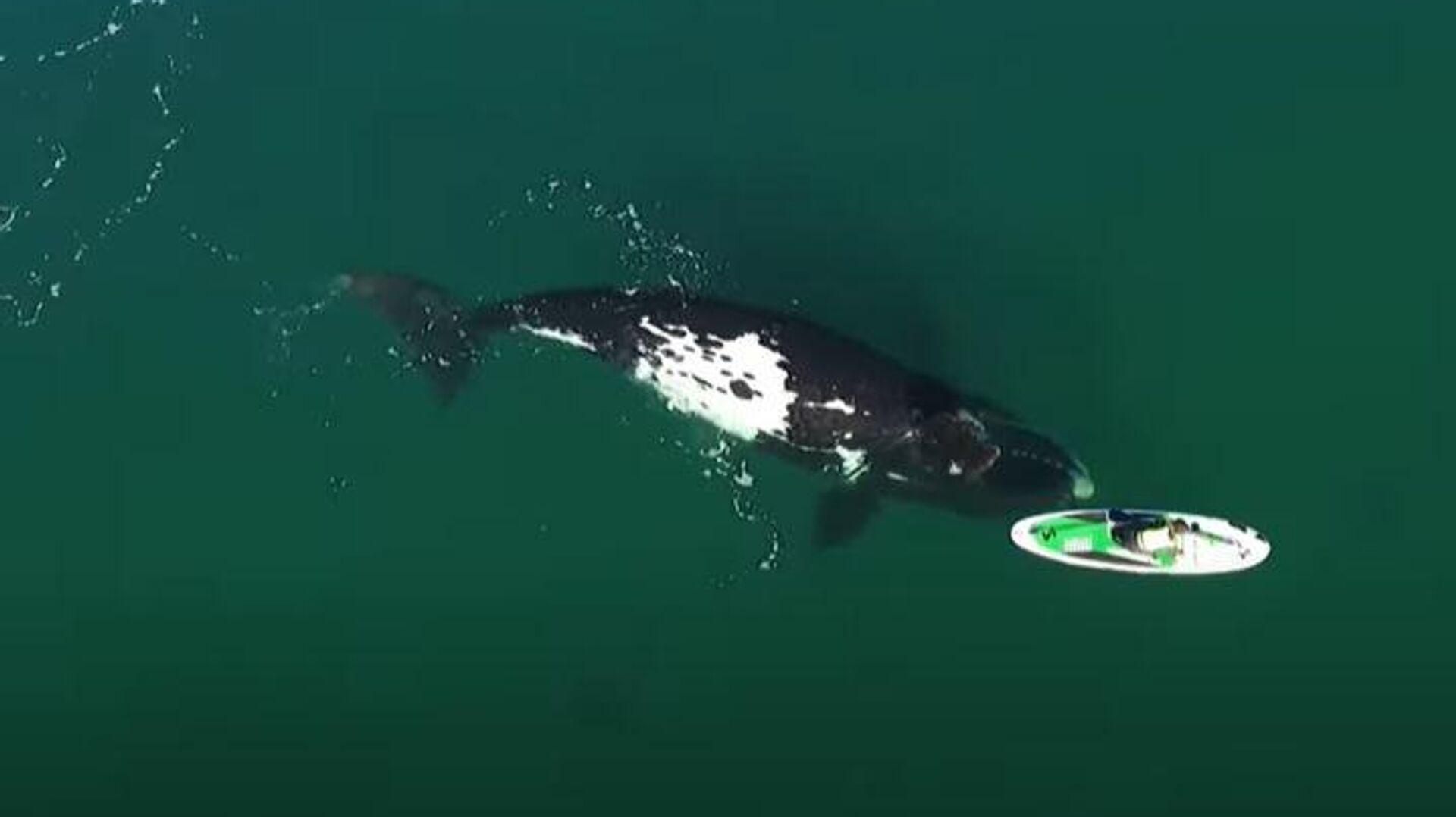 Φάλαινα σπρώχνει φάλαινα που κάνει βαρκάδα στον Ατλαντικό Ωκεανό - Sputnik Ελλάδα, 1920, 15.09.2021