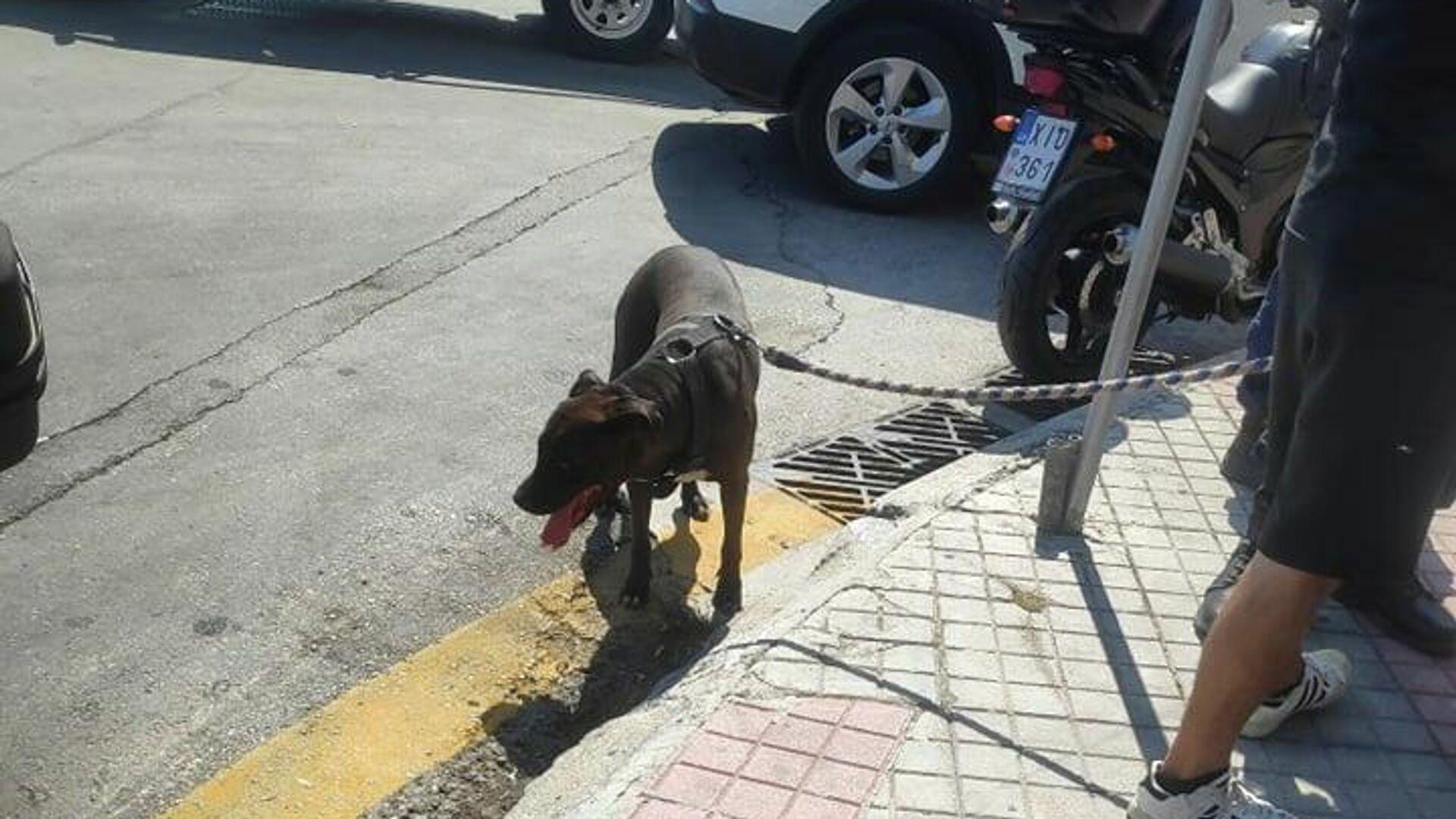 Το σκυλί που υπέστη κακοποίηση από το αφεντικό του στη Μυτιλήνη - Sputnik Ελλάδα, 1920, 17.09.2021