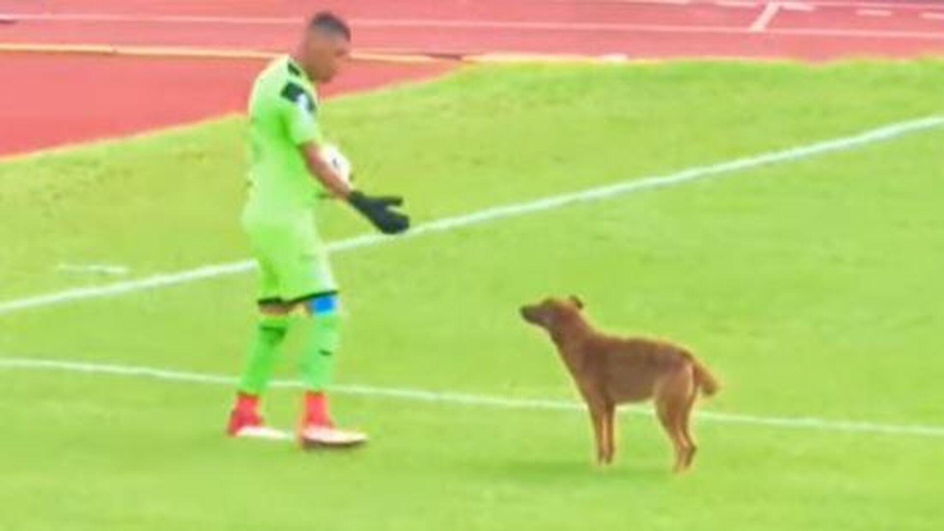 Σκύλος σε αγώνα στην Ονδούρα - Sputnik Ελλάδα, 1920, 17.09.2021