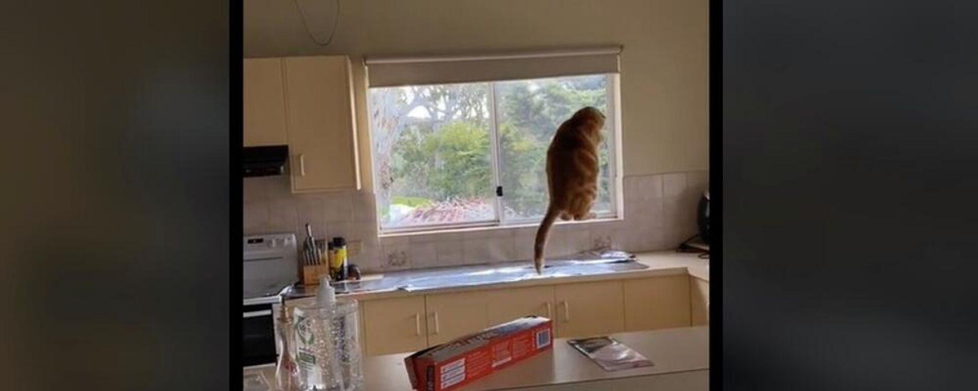 Το τέλειο κόλπο για να κρατάς τη γάτα μακριά από τον πάγκο της κουζίνας - Sputnik Ελλάδα, 1920, 17.09.2021