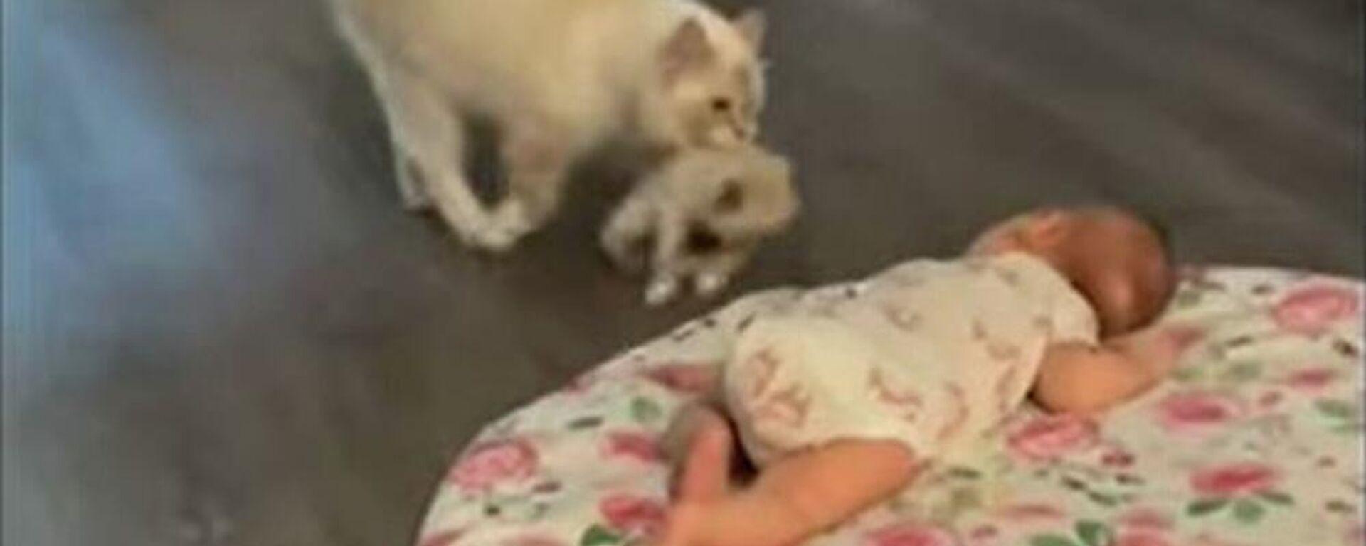 Γάτα φέρνει το γατάκι της να το γνωρίσει στο νεογέννητο μωρό της αφεντικίνας - Sputnik Ελλάδα, 1920, 17.09.2021