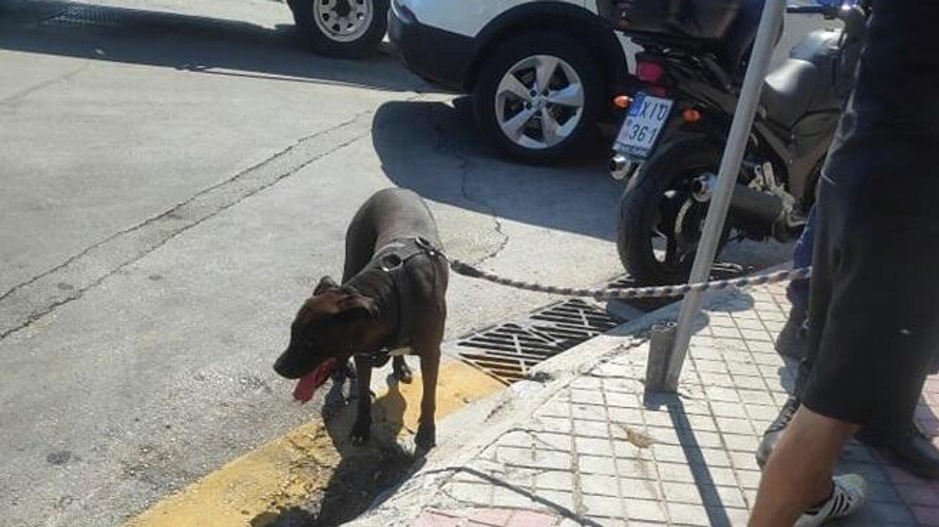 Κακοποίηση σκύλου στη Μυτιλήνη - Sputnik Ελλάδα, 1920, 18.09.2021