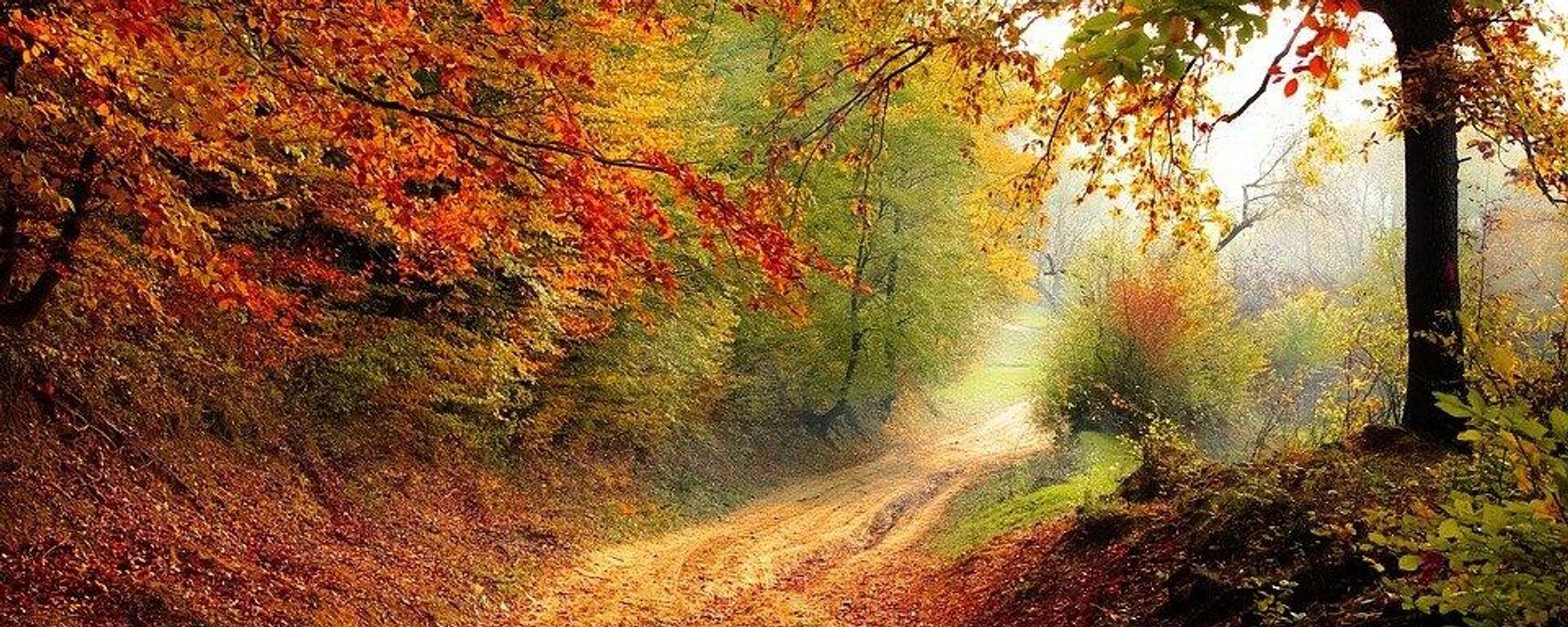 φθινόπωρο -δάσος - Sputnik Ελλάδα, 1920, 22.09.2021