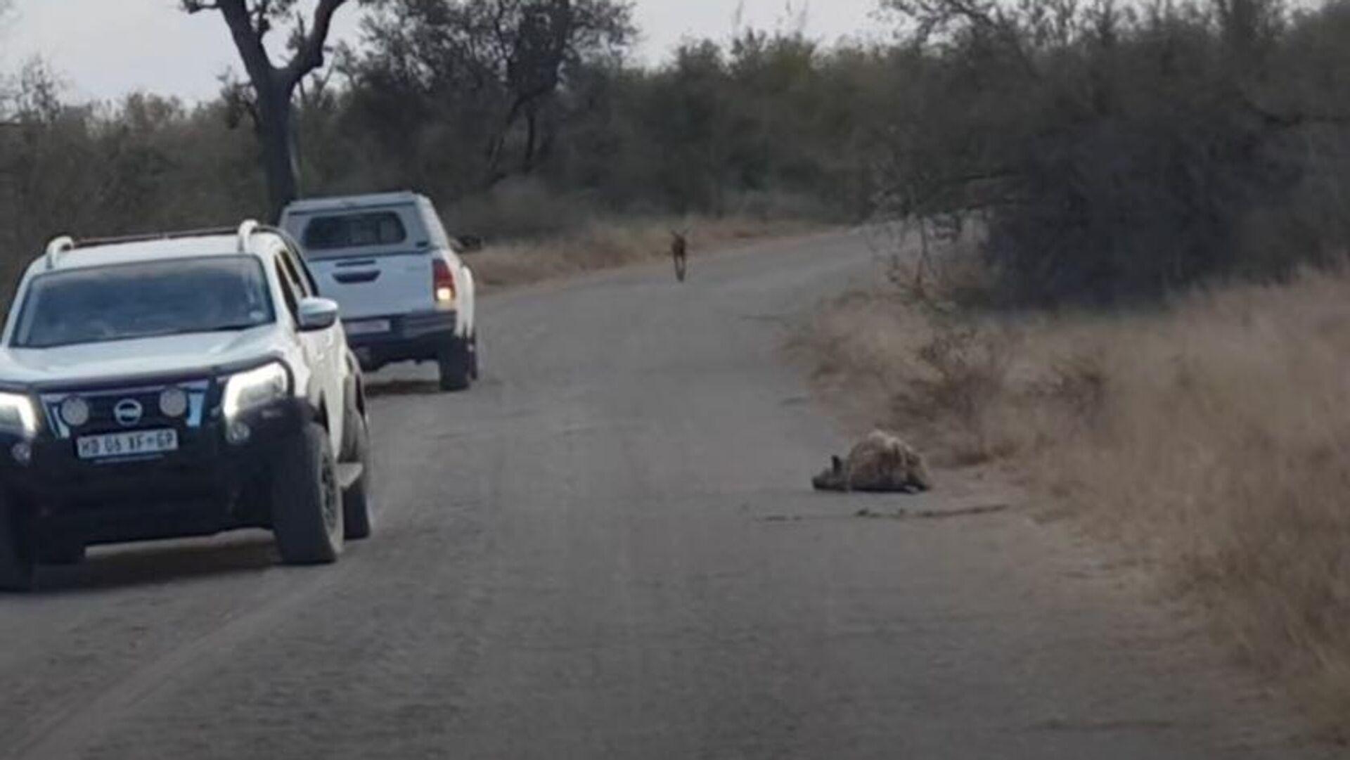 Ύαινα είναι ξαπλωμένη στην άκρη του δρόμου στο εθνικό πάρκο Kruger στη Νότια Αφρική - Sputnik Ελλάδα, 1920, 25.09.2021