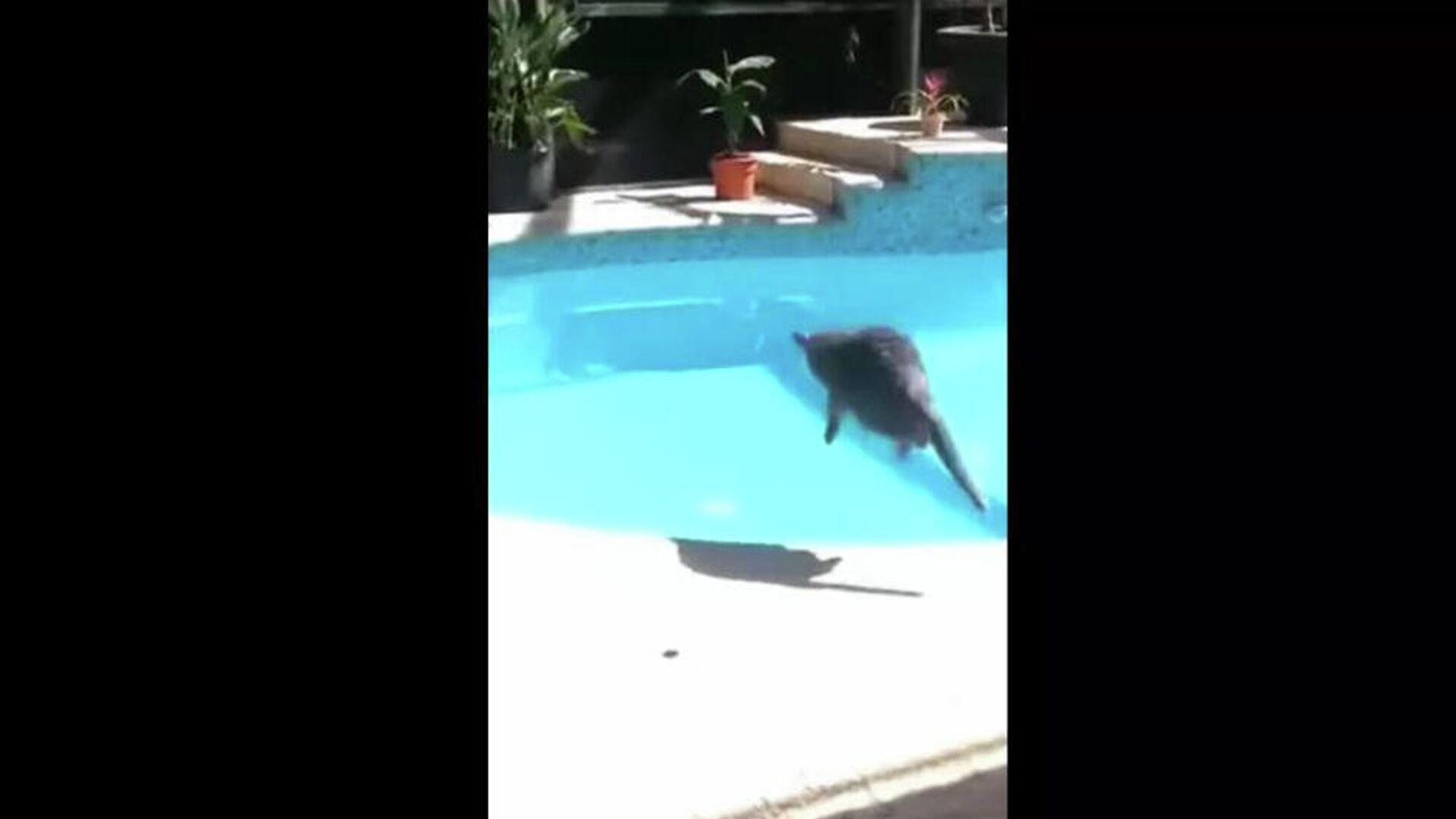 Γάτα τρομάζει και πέφτει στην πισίνα - Sputnik Ελλάδα, 1920, 24.09.2021