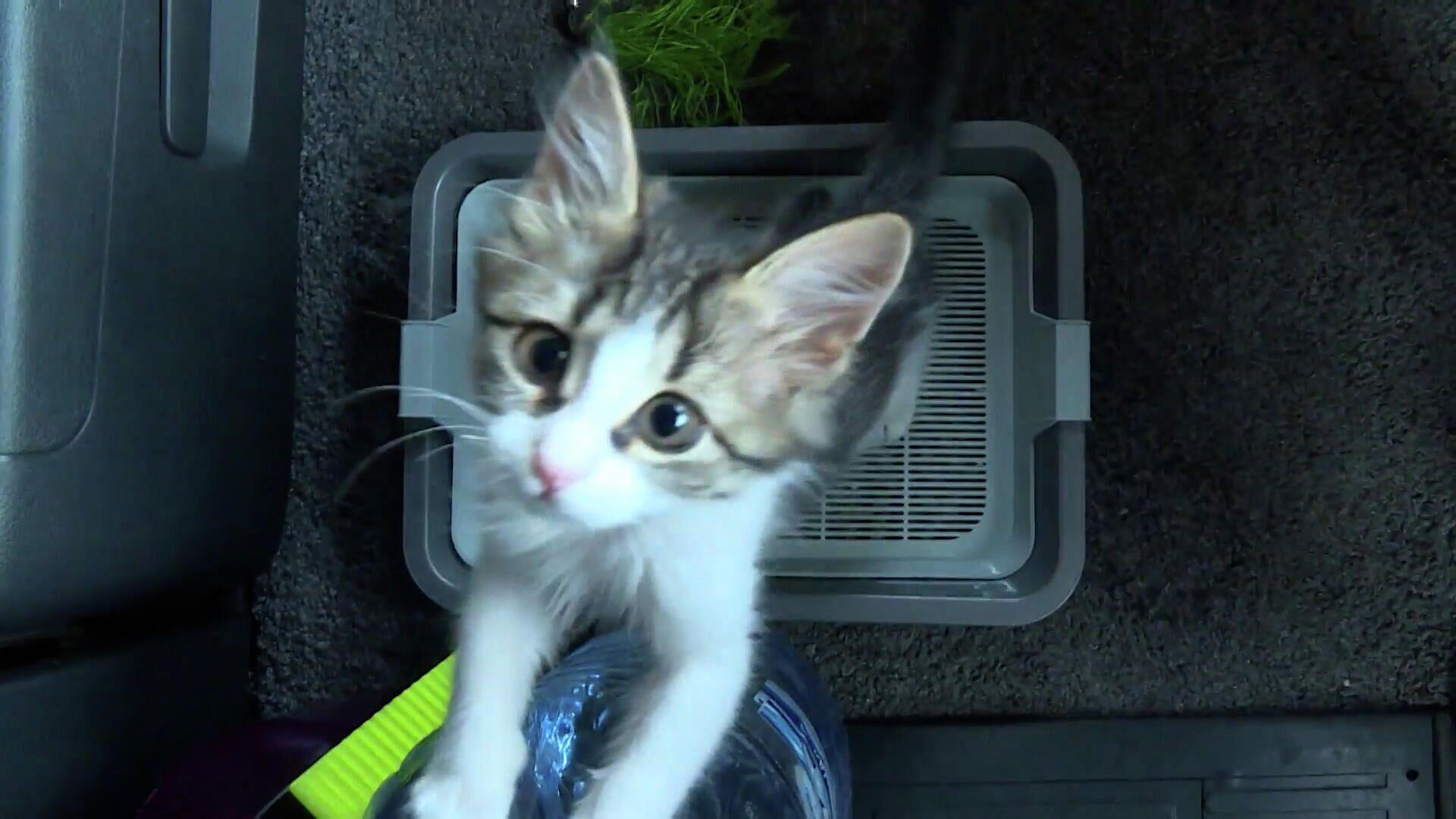 Ο πιο γλυκός συνταξιδιώτης: Οδηγός νταλίκας έσωσε αβοήθητο γατάκι και το πήρε μαζί του - Sputnik Ελλάδα, 1920, 30.09.2021