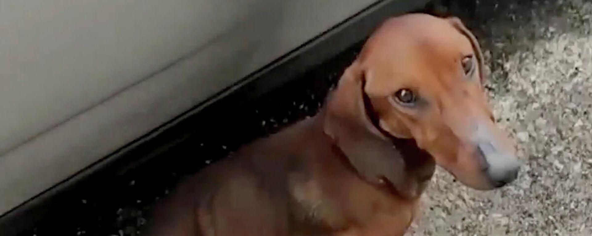 Μάτια γεμάτα ευγνωμοσύνη: Άνδρας σώζει υποσιτισμένο σκύλο που εγκαταλείφθηκε σε αυτοκινητόδρομο  - Sputnik Ελλάδα, 1920, 03.10.2021