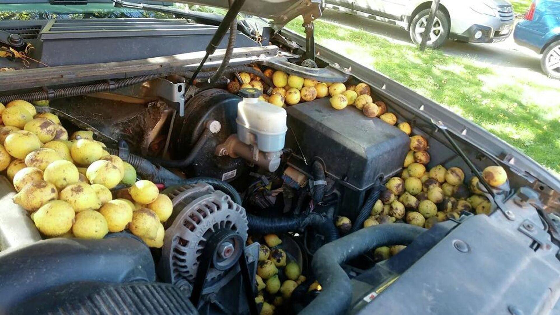 Σκίουρος έκρυψε 148 κιλά ξηρούς καρπούς στο φορτηγάκι άντρα στις ΗΠΑ - Sputnik Ελλάδα, 1920, 06.10.2021