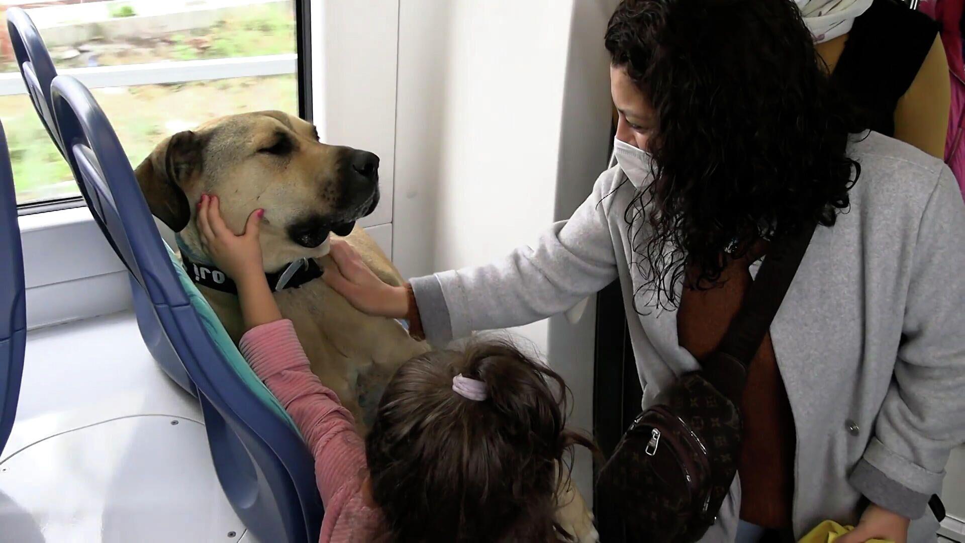 Αδέσποτος σκύλος παίρνει το μετρό για να πάει βόλτα και γίνεται ο καλύτερος φίλος των επιβατών - Sputnik Ελλάδα, 1920, 07.10.2021