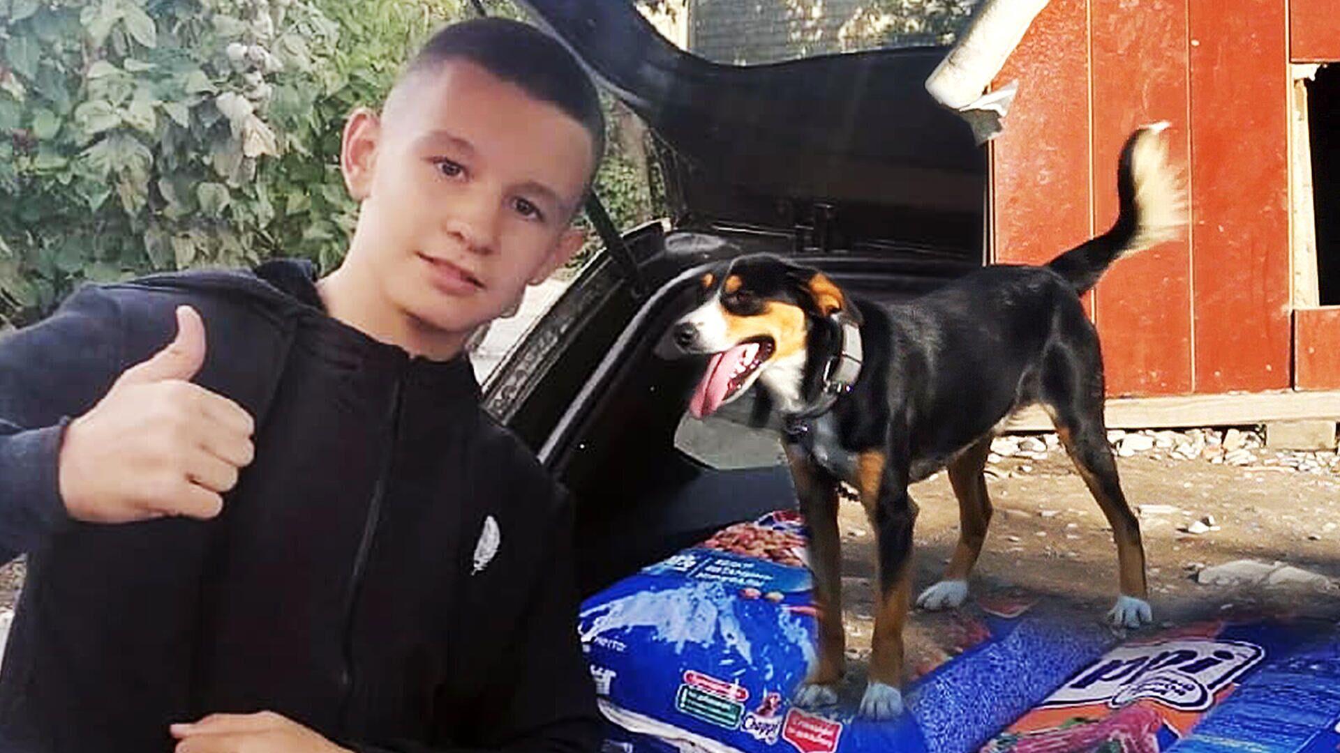 Αγόρι κερδίζει χρηματικό έπαθλο και τα ξοδεύει όλα σε σκυλοτροφή για καταφύγιο σκύλων - Sputnik Ελλάδα, 1920, 07.10.2021