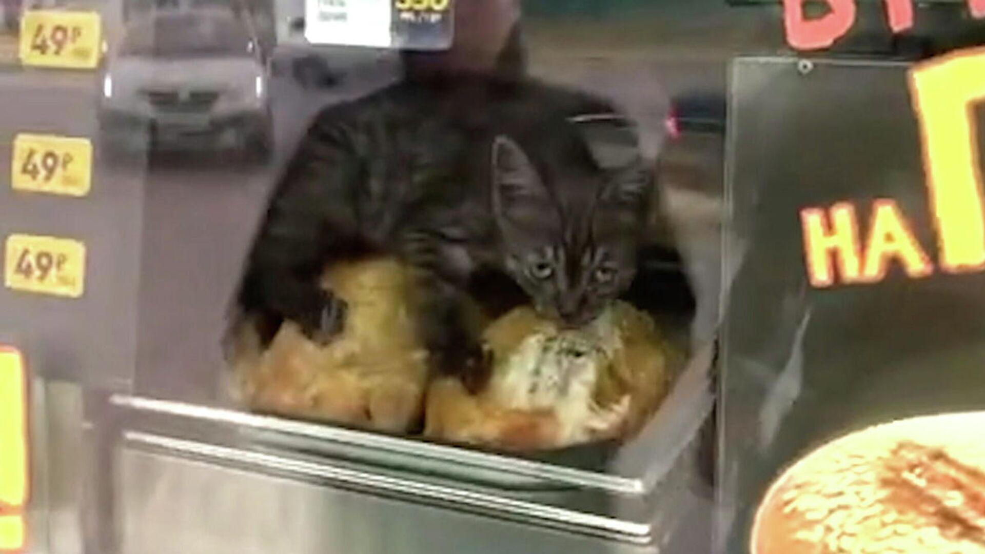 Αδέσποτο γατάκι ζει το απόλυτο όνειρο σε καντίνα με ψητά κοτόπουλα - Sputnik Ελλάδα, 1920, 08.10.2021
