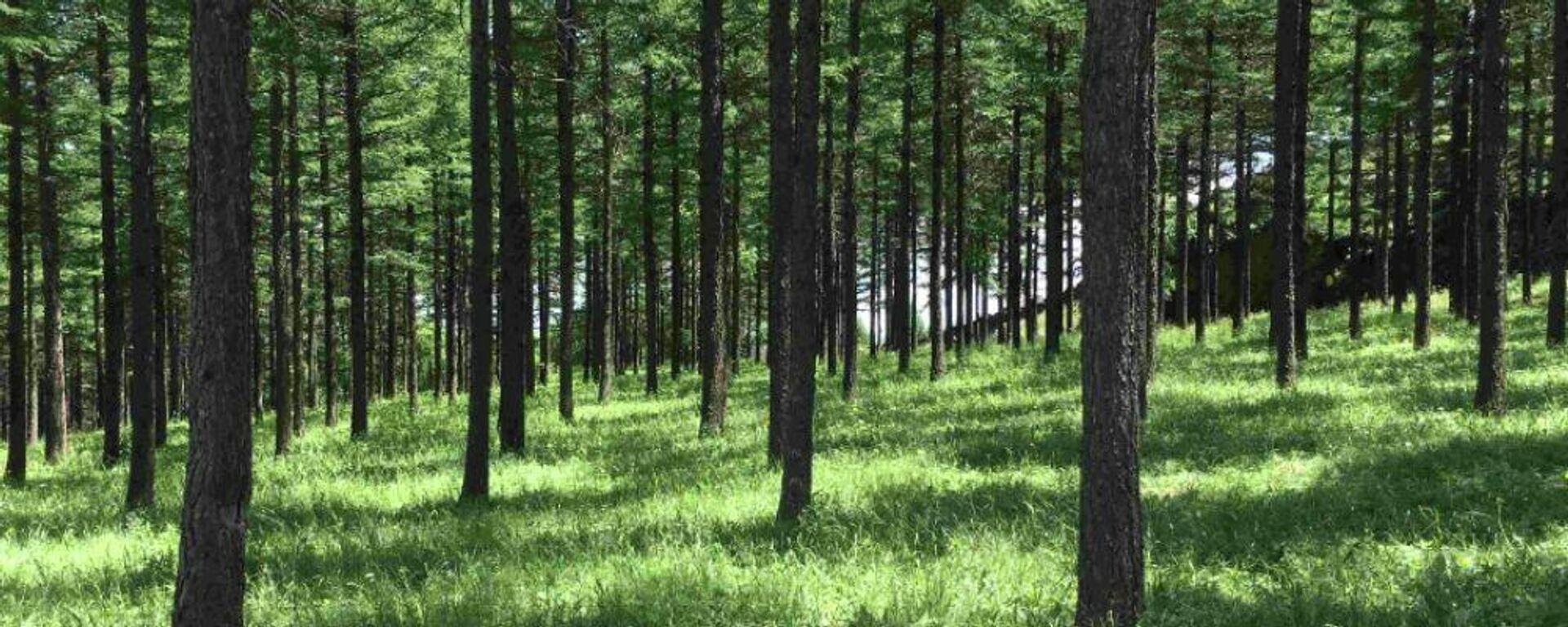 Το μεγαλύτερο αναδασωμένο δάσος στον κόσμο - Sputnik Ελλάδα, 1920, 08.10.2021