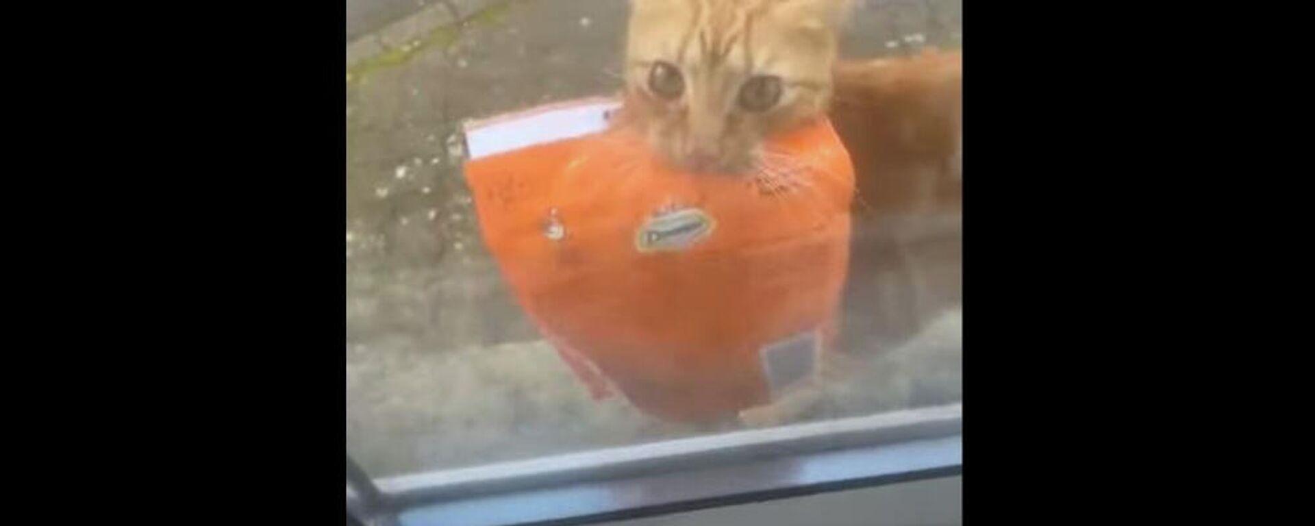 Πονηρός γάτος κλέβει διαρκώς σακούλες γατοτροφή από τη γειτόνισσα - Sputnik Ελλάδα, 1920, 08.10.2021