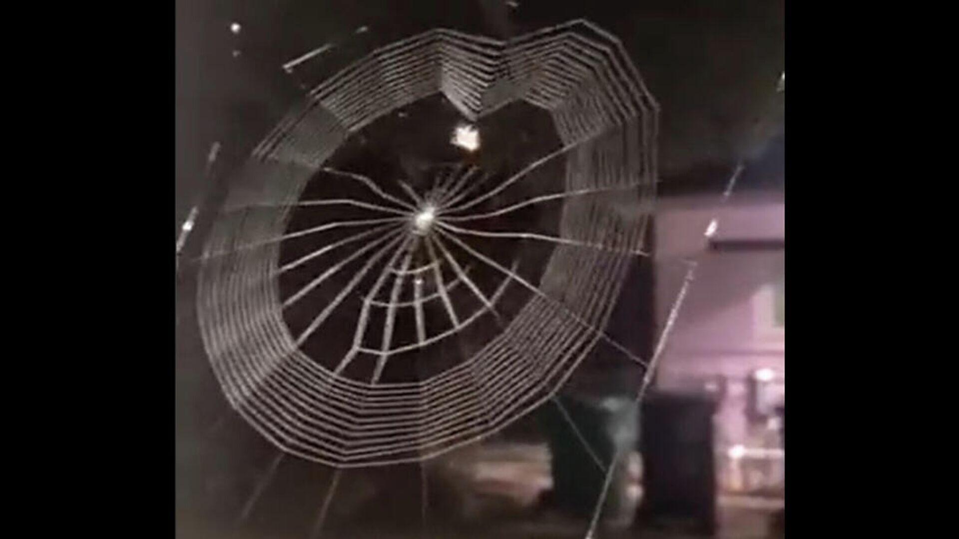 Μια αράχνη υφαίνει τον ιστό της - Sputnik Ελλάδα, 1920, 10.10.2021