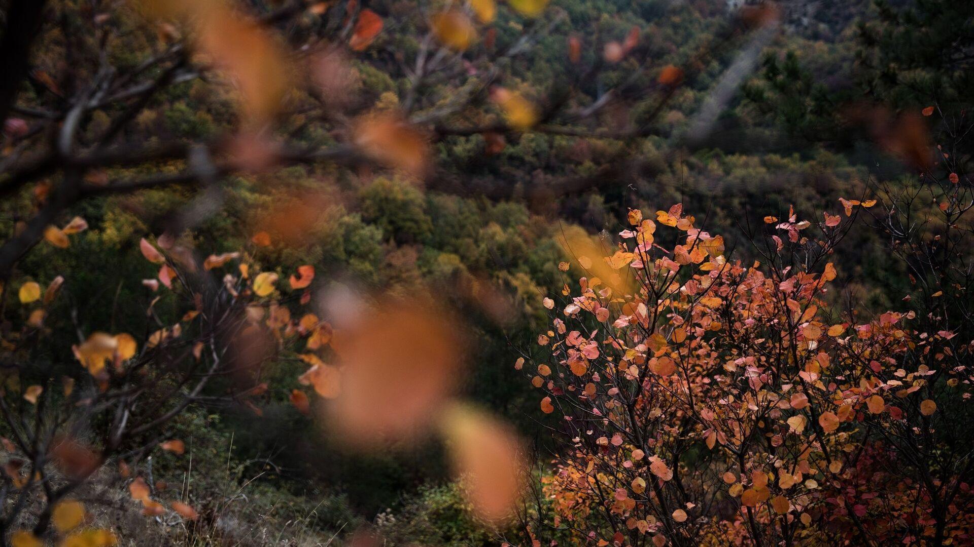 Φθινοπωρινό τοπίο στο Ζαγόρι - Sputnik Ελλάδα, 1920, 21.09.2021